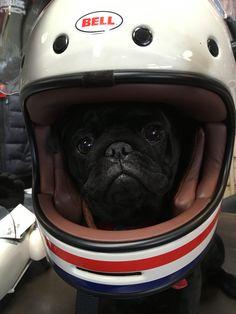 www.lagrangeascooters.com Scooters, Bmx, Motocross, Helmet Shop, Harley Davidson Motorcycles, Motorcycle Helmets, Beagle, Biker, Vehicles