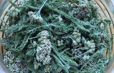 Dvije biljke koje liječe gotovo sve ženske bolesti! ~ Prirodni lijek