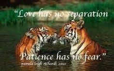 Image result for tiger quotes