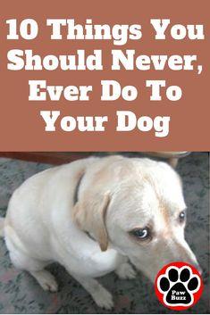 dog training,dog hacks,teach your dog,dog learning,dog tips Dog Training Videos, Training Your Dog, Training Classes, Training Academy, Training School, Crate Training, Dog Health Tips, Pet Health, Dog Care Tips