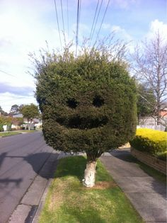 Check out this tree who's just so stoked to be a tree. | 25 Photos Guaranteed To Brighten Your Day