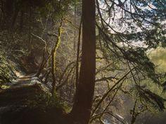 Hiking towards Punch Bowl Falls Portland OR. [2684x1982] (OC)