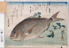 size: Giclee Print: Red Sea Bream, by Utagawa Hiroshige : Entertainment Japanese Prints, Japanese Art, Japanese Painting, Mont Fuji, Japanese Embroidery, Embroidery Techniques, Woodblock Print, Asian Art, Find Art