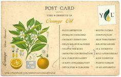 Benefits & Uses of Orange Essential Oil. Orange Essential Oil, Natural Essential Oils, Young Living Essential Oils, Natural Oils, Holistic Care, Holistic Healing, Healing Oils, Healing Herbs, Orange Oil Uses