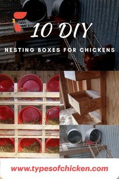 Need for ideas for nesting boxes for chickens. Here are some DIY Nesting boxes for chickens that can help you in your choice.  #chickens #nestingboxesforchickens #homestead #farmer #farmerlife #homesteading #animals Types Of Chickens, Raising Backyard Chickens, Backyard Chicken Coops, Chickens And Roosters, Pet Chickens, Chicken Nesting Boxes, Building A Chicken Coop, Grow Your Own Food, Poultry