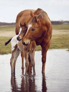 Im Wasser kuschelt dieses Pferd mit dem Fohlen. #APASSIONATA