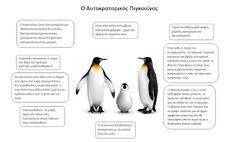 Μικρό Νηπιαγωγείο - Νηπιαγωγείο Μικρόπολης Ν. Δράμας: Η ΖΩΗ ΣΤΟΥΣ ΠΑΓΟΥΣ ( Οι πιγκουίνοι) Penguins, Blog, Animals, Animales, Animaux, Penguin, Blogging, Animal, Animais