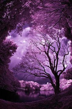 Mother Nature is the best artist. Simply beautiful- I'm in purple heaven~ Purple Sky, Purple Love, All Things Purple, Shades Of Purple, Purple Trees, Purple Stuff, Plum Purple, Magenta, Lilac