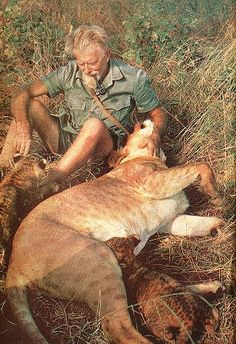 British conservationist George Adamson, whose work featured in the film Born Free was murdered by bandits in Kenya on this day 21st August, 1990