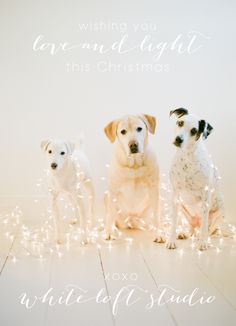 omg they are so darn cute! c/o white loft studio