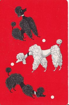 Tea Cup Poodle, Pink Poodle, I Love Dogs, Cute Dogs, Gato Animal, French Poodles, Standard Poodles, Poodle Cuts, Puppy Cut