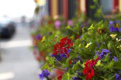 …fleurs de Morgane