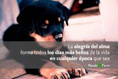 Be happy! #dogs #perros #puppy #puppies #frases #quotes #friends #amor