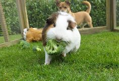 this little piggie doesn't want to share his brocoli