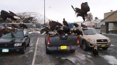 """If there's something that screams """"AMERICA"""" more than a huge flock of bald eagles attempting to destroy three Japanese cars in a grocery store parking lot, I don't want to know about it...."""