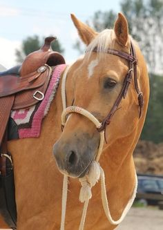 Tacked and ready to ride