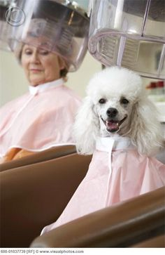 Woman and Poodle at Hair Salon