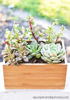 Easy Succulent Planter {ikea hack}