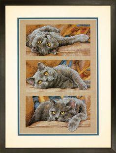Counted Cross Stitch Kit GARDEN STEPS Cats Felines Kitten Dimensions