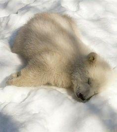 Photographer gets up close with orphan polar bear adorables funny graciosos hermosos salvajes tatuajes animales Baby Polar Bears, Cute Polar Bear, Baby Pandas, Cute Baby Animals, Funny Animals, Wild Animals, Sleepy Bear, Baby Otters, Bear Photos