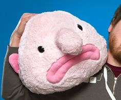 The blobfish plush is so plush and cuddly that it just might make you think the ugliest creature on Earth is actually kind of cute. This 2 ft long plushie is...