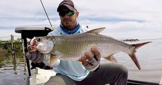 Juvenile tarpon. Fishing Videos, Fishing Tips, Fishing Report, Sunset Pictures, Manatee, Red Fish, My Land, Saltwater Fishing, Coming Home