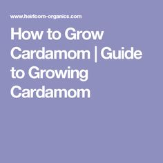 How to Grow Cardamom | Guide to Growing Cardamom