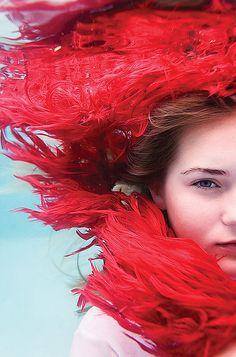 Anemone photo by Elena Kalis