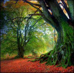 Les plus beaux arbres du Monde - Les couleurs de l'automne en Ecosse