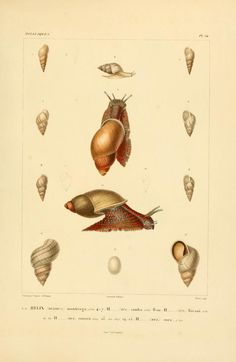 T.9 - Voyage dans l'Amérique Méridionale - Biodiversity Heritage Libraryhttp://biodiversitylibrary.org/page/14544431. #WorldOceansDay