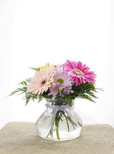 Send fresh daisies to brighten anyone's day!