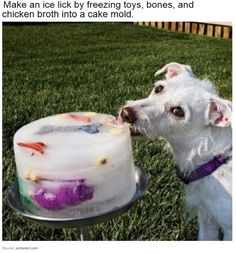 Make an ice lick on hot days for your little buddy. | 25 Brilliant Lifehacks That Every Dog Owner Should Know