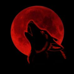 wolf and moon black and red Red moon Wolf wallpaper Red and black wallpaper