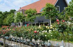 Informatie of bestellen van Rozen en/of Clematis   Zeeuwse Rozentuin   rozenkwekerij   landschapstuin   clematissen   te koop   leuk dagje weg   Zeeland   Noord Beveland   Cats  