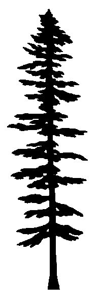 Impression Obsession Cling Stamp PINE TREES CC101 | Minnesota, Be ...