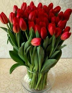 Red Tulips, Tulips Flowers, All Flowers, Amazing Flowers, Beautiful Roses, My Flower, Spring Flowers, Red Roses, Planting Flowers