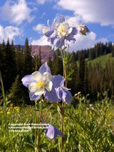 Favorite Fine art photography of Colorado, Page 2