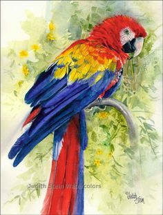 SCARLET MACAW Zoo Bird 11x15 Signed Watercolor by steinwatercolors, $40.00