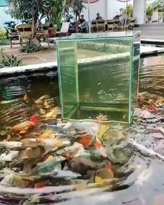 Incredible Pond Koi Idea - above water fish tank Koi Fish Pond, Paludarium, Swimming Pool Designs, Cute Funny Animals, Red Ombre, Ombre Hair, Red Hair, Fish Tank, Beautiful Creatures