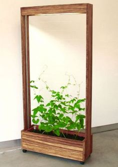 Bean Screen Room Divider. I'd like to build one of these for my hoya carnosa vine. Would be great for pothos too. Might even work for my gigantic Monstera deliciosa if I added a lot more structure in between the support coloums.