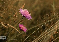 Sommerzeit by RIserPhotography. Please Like http://fb.me/go4photos and Follow @go4fotos Thank You. :-)