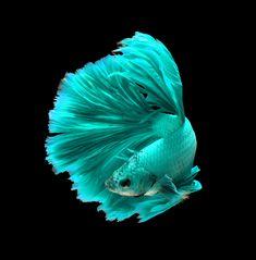 Atlantis Fish