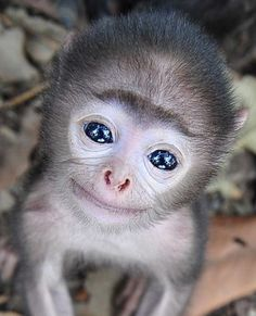 You can see the whole world reflected in this little ones eyes. Precious!!