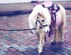 pink, purple and petite. (Source: heartandhoof)