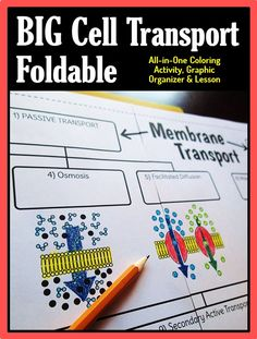 Get your students excited about learning cell transport. This all-in-one lesson, coloring activity and graphic organizer leaves a lot of room to write descriptions of each type of cell transport. Science Cells, Science Biology, Science Education, Life Science, Cell Biology, Ap Biology, Forensic Science, Higher Education, Computer Science