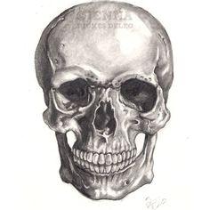 Anatomy Skull drawing print Black and White - 4 x 6 $8.50