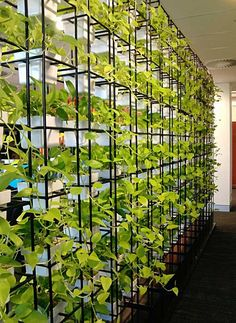 vertical garden space divider adds a fresh touch and is a unique solution Garden Dividers, Space Dividers, Dividers For Rooms, Office Dividers, Wall Dividers, Living Room Divider, Green Office, Room With Plants, Office Plants