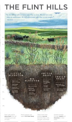 This website has a ton of lesson plans about the Flint Hills and Kansas! There are some for grades and all content areas. Great for Kansas Day, Project Based Learning, and NGSS! Kansas Day, Flint Hills, Special Holidays, Plant Science, Content Area, Project Based Learning, Teacher Hacks, Tilt, Nebraska