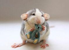 Les Photographes Jessica Florence et Ellen van Deelen ont fait équipe avec leurs Rats de Compagnie afin de montrer au monde qu'il n'y a rien de plus mignon lorsqu'ils sont avec leur Peluche.