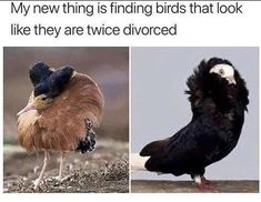 Wonderful world of birds...